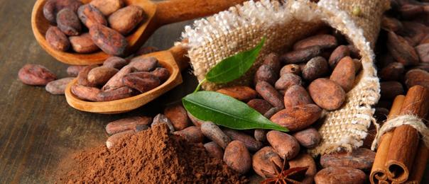 graine cacao